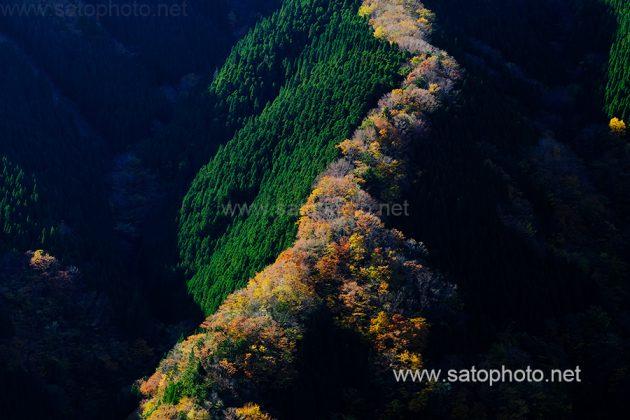 奈良 ナメゴ谷
