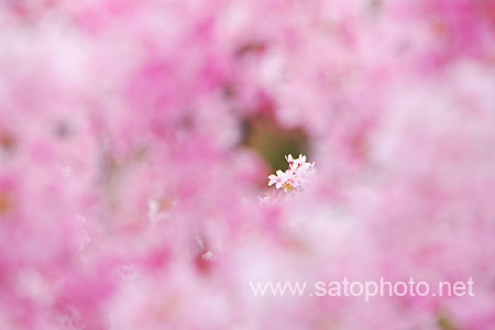 02_sato_one.jpg