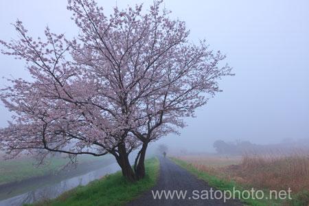 霧の見沼田んぼ