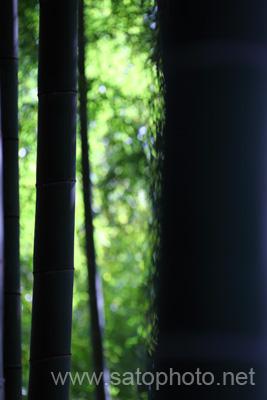 トラスト林